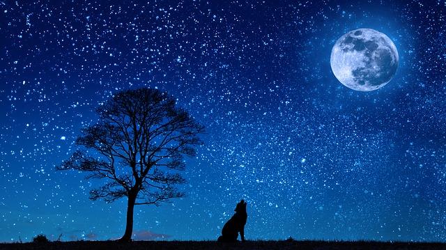 思春期の子どもが夜更かししてしまうのはなぜ?