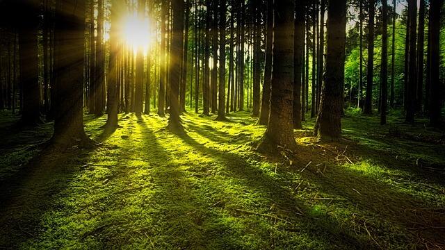 日中に太陽の光を浴びる