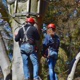 木のぼりでストレス解消!大人でも木のぼり効果でメンタルを改善してみよう!